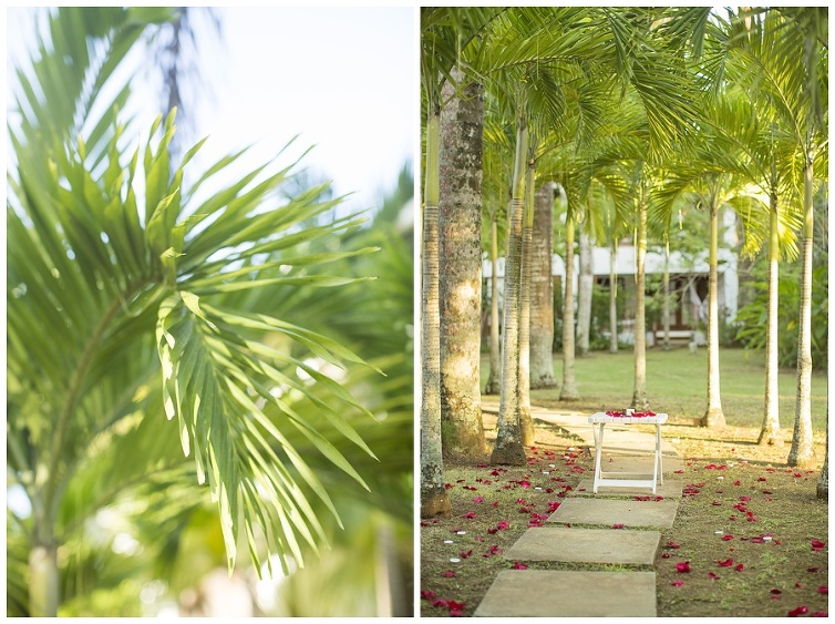 Iowa Wedding Photographer, Tropical Proposal